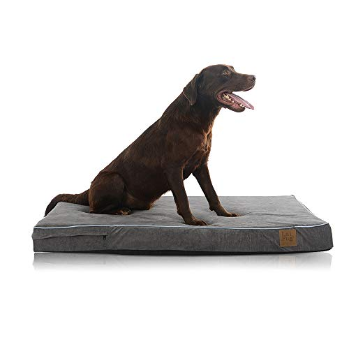 Laifug Orthopedic Memory Foam Pet/Dog Bed with Durable Water Proof...