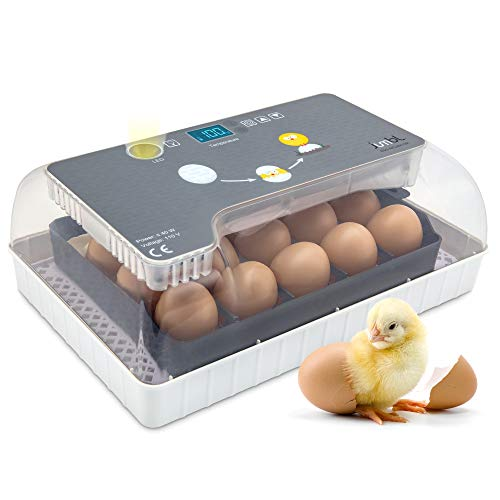 Jumbl Clear Egg Incubator, Fully Automatic Digital Poultry...