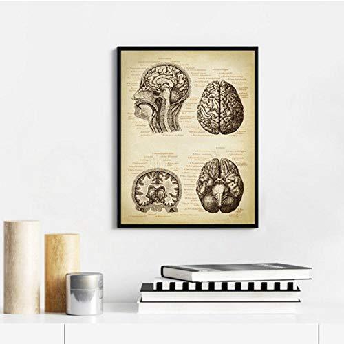 LLXHGGehirn Medical Print Menschlichen Kopf Anatomie Vintage Illustration Poster Neurologie Wissenschaft Kunst Leinwand Gemälde Bild Arzt Geschenk-20X30Cm Kein Rahmen