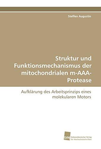 Struktur und Funktionsmechanismus der mitochondrialen m-AAA-Protease: Aufklärung des Arbeitsprinzips eines molekularen Motors
