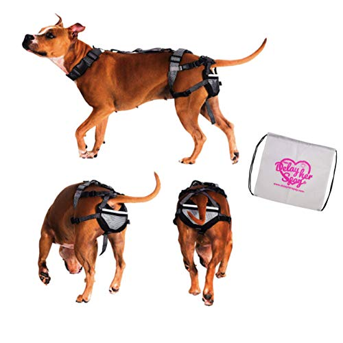 PABS Dog Chastity - Chastity for Dogs - Pet Anti-Breeding System Storage Travel Bag - Dog Period Pads Option Available (Dog Chastity & Storage Bag - No Sani-T Pads, Large (35-55lbs))