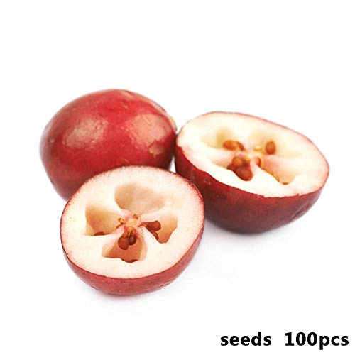 100 Stk Cranberry Samen Obst Gemüse Blume Home Pflanzdekor