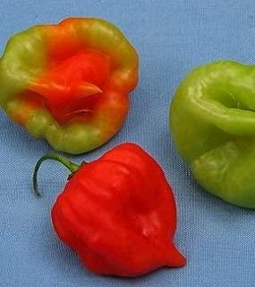 Sweet Pepper or Aji Dulce 25 Seeds -- Capsicum Chinense Organic- Non GM