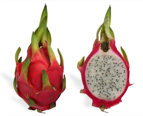 20 WHITE DRAGON FRUIT (Pitaya / Pitahaya / Strawberry Pear) Hylocereus Undatus Cactus Seeds by Seedville