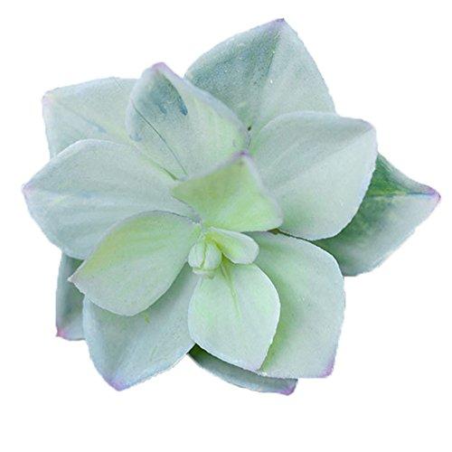 jarown suculentas plantas Cactus Artificial Lotus Chitose paisaje flores Bosai DIY para Hogar Oficina Decoración Juego de 3