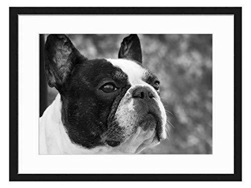 Wood Framed Canvas Artwork Home Decore Wall Art (Black White 20x14 inch) - French Bulldog Portrait Dog Pet Look