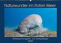 Naturwunder im Roten Meer (Wandkalender 2022 DIN A2 quer): Unterwasseraufnahmen aus Aegypten (Monatskalender, 14 Seiten )