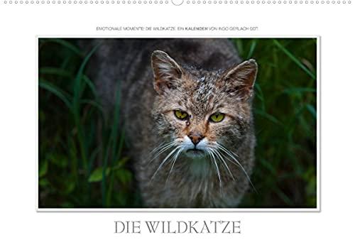 Emotional moments: the wild cat. CH version (wall calendar 2022, DIN A2 landscape)