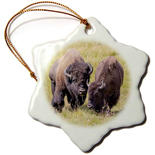 3dRose USA, Wyoming, Yellowstone NP. Two Buffalos in Grassy Field - Ornaments (ORN_333172_1)