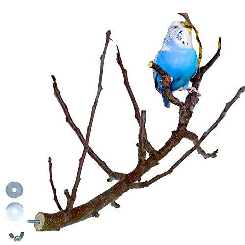 Aufregend VERZWEIGTE Obst Sitzstange für Vögel wie Wellensittich & Nymphensittich | Die Natur Sitzstangen sind im Vogelkäfig ideal für die Krallenabnutzung und Schnabelwetzen