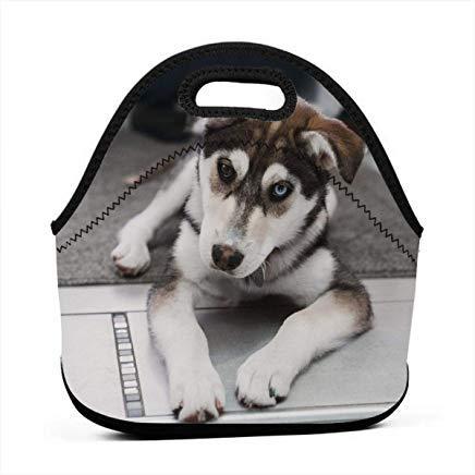 wendana de Husky hond leggen op het tapijt in de buurt van de trappen Neopreen Lunch Tassen geïsoleerde herbruikbare Lunch Tote Tassen voor vrouwen voor het werk, School Lunch Box voor kinderen