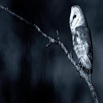 Owl Sex Life