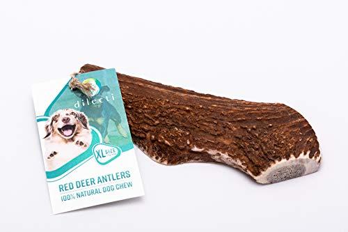 Dilecti Hirschgeweih Hundekauen - Split-Geweih für Hunde Langlebiges Natürliches Hundekauen (Größe XL)