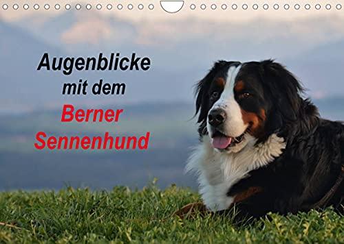 Augenblicke mit dem Berner Sennenhund (Wandkalender 2022 DIN A4 quer)