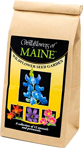 Maine Wildflower Seed Mix - A Beautiful Collection of Twelve annuals and perennials - Enjoy The Natural Beauty of Maine Flowers in Your own Home Garden