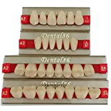smiledt Acrylic Resin Teeth Dental Denture Halloween Horror Prop Middle Size