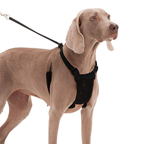 What Is the Best Harness for a Dog That Pulls?