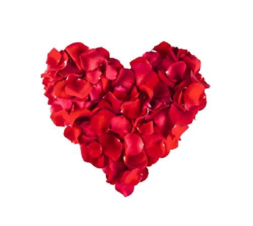 Sonnenscheinschuhe 500 Stück künstliche Rosenblätter Rot Dekoration Hochzeit Liebe Romantik Rote...