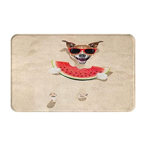 MJIAX Alfombras de baño, alfombras de baño,Jack Russell Dog Beach Summer con Gafas de Sol Rojas co, Alfombras de Felpa Alfombras Felpudo Suave y Duradero Alfombras decoración Antideslizante