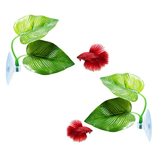 CousDUoBe 2 Pack Betta Fish Leaf Pad Improves Betta's Health by Simulating The Natural Habitat - Natural, Organic, Comfortable Rest Area for Fish Aquarium
