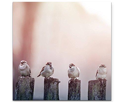 Paul Sinus Art Leinwandbilder | Bilder Leinwand 60x60cm Spatzen auf einem Holzzaun