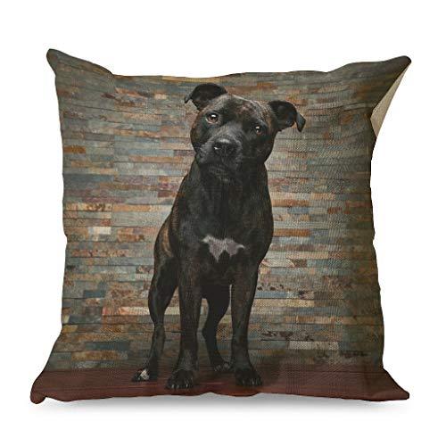 IOVEQG Stafford Bull Terrier - Juego de fundas de almohada cuadradas con cremallera oculta para sofá, estilo cálido, 45 x 45 cm, color blanco