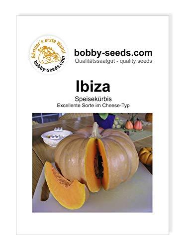 Ibiza Kürbissamen von Bobby-Seeds, Portion