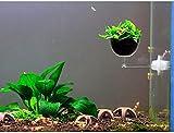 TBNB Planta de decoración de Acuario Maceta de Vidrio con ventosas Pecera Planta de Vidrio de Acuario para Plantas de Maceta de Acuario