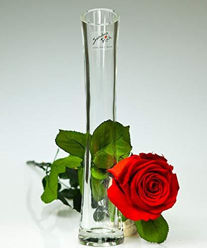 """Rosen-te-amo Infinity echte Rose mit hochwertigen """"Diago"""" Vase und Grußkarte zum Herunterladen..."""
