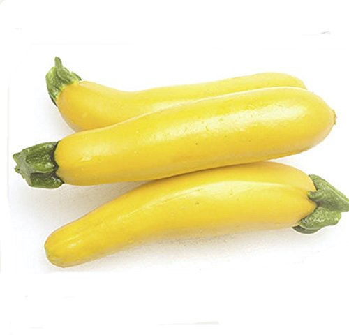 Zucchini Gold Rush Gelbe Zucchini Samen