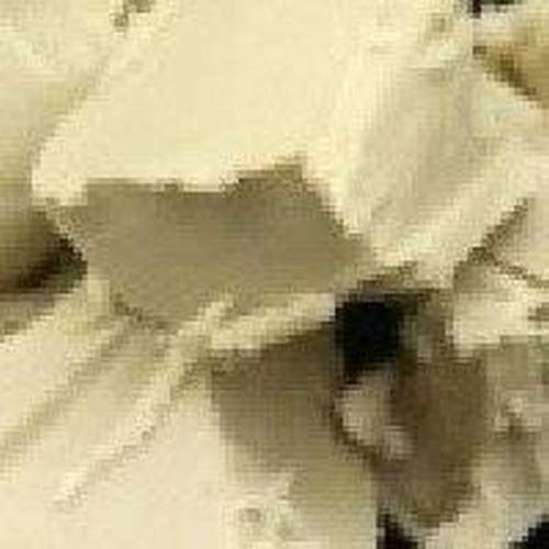 シア バター オーガニック 未精製 5kg
