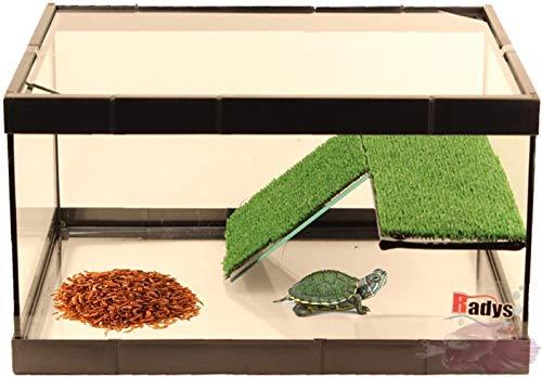 conseguir peceras para tortugas