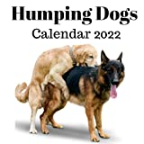 Humping Dogs Calendar 2022: Monthly Planner from July 2021 to December 2022 Perfect gift Ideas For dog lovers in birthday or Christmas.