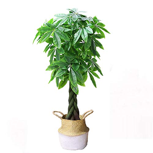 Yipianyun Palme Palmenbaum Königspalme, Cocospalme Kunstpflanze Kunstbaum Künstliche Pflanze Echtholz Hochzeit/Party Empfangstisch Blumen,Weiß,140cm
