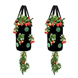 Miewslan 2 Pack Gardens Upside Down Strawberry Planter,Hanging Tomato Strawberry Grow Planter Garden Vegetable Planting Bags with Holes(Black)
