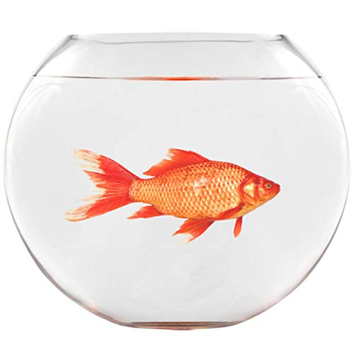 VWAQ Goldfish Fishbowl Wall Stickers - Funny Vinyl Decals Humorous Art Decor - FWP7 …