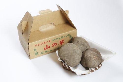 ヤマノイモ 栽培時 農薬 化学肥料 不使用 大和万葉の里 堤さんの 山の芋 3~4個 約1.2kg 奈良 産地直送