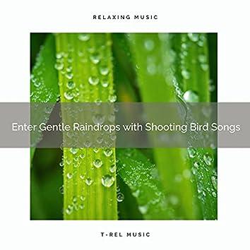 ! ! ! ! ! ! ! ! ! ! Enter Gentle Raindrops with Shooting Bird Songs