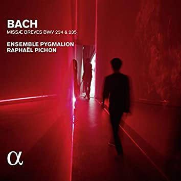 Bach: Missae breves BWV 234 & 235 (Alpha Collection)