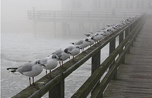Pájaros En El Camino De Tablones sobre El Mar Animales 1000 Piezas Rompecabezas Desafiante Rompecabezas Avanzado Caja De Rompecabezas Regalo De Cumpleaños para Padre Y Madre