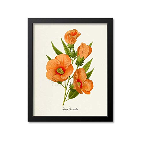 Sumpf Rosemallow Flower Art Print Botanischer Kunstdruck Flower Wall ArtFlower PrintFlower Art PrintHome DecorHibiscus moscheutosorange