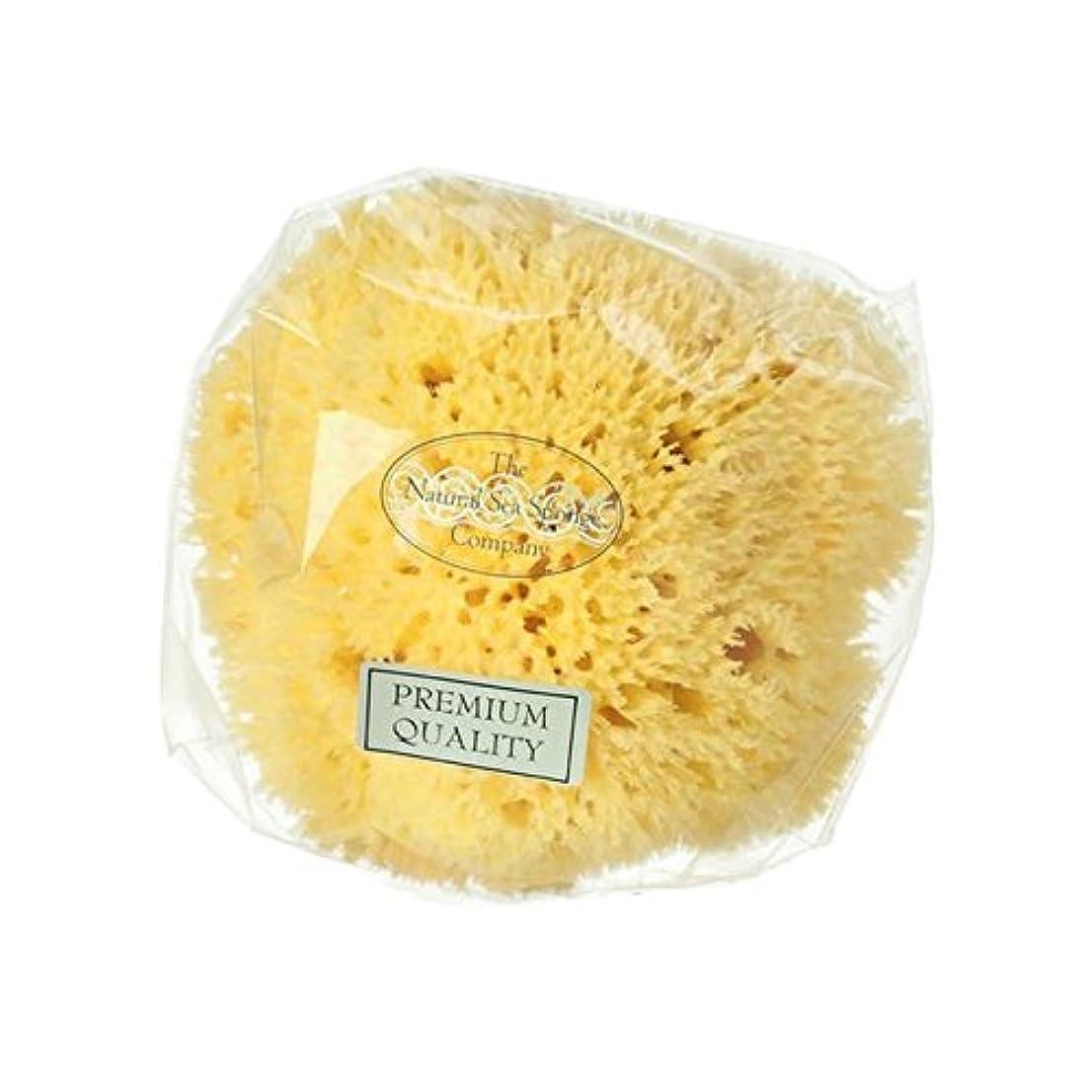 パーティー器具アートハイドレアロンドンハニカム海のスポンジ x2 - Hydrea London Honeycomb Sea Sponge (Pack of 2) [並行輸入品]