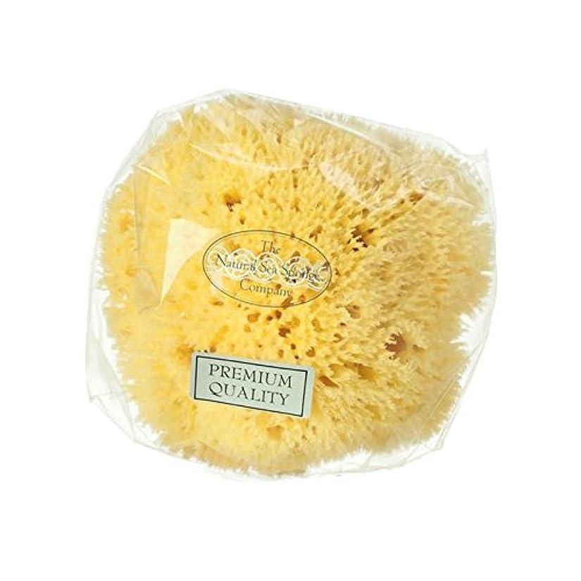 ウィザード教えてフィラデルフィアHydrea London Honeycomb Sea Sponge - ハイドレアロンドンハニカム海のスポンジ [並行輸入品]