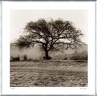 ポスター アラン ブラウステイン Willow Tree 額装品 アルミ製ベーシックフレーム(シルバー)