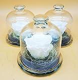 Almaflor Rosa eterna Blanca. Mini Campana de Cristal con Rosa eterna Blanca, sobre Base de Musgo y sisal. Hecho en España