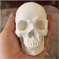 等身大の人間の頭蓋骨モデル-人間の成人の頭蓋骨の頭骨モデル-医療解剖学的追跡医療教育スケルトンハロウィーン装飾像