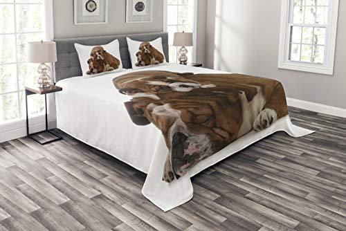ABAKUHAUS Buldogge angielski zestaw narzut, ojciec i syn, zestaw poszewek na poduszki, kołdra letnia, do łóżek dwuosobowych 264 x 220 cm, biało-czarno-brązowa
