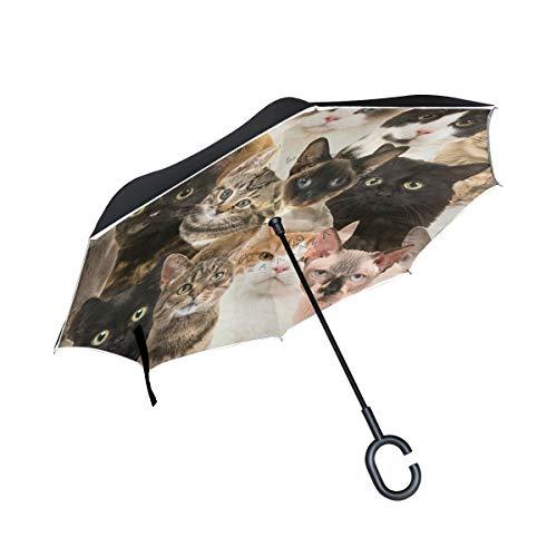 BIGJOKE Paraguas invertido de Doble Capa, Colorido, Estampado de Gato, Paraguas invertido, Resistente al Viento, Resistente al Agua, para Auto, al Aire Libre, Viajes, Adultos, Hombres y Mujeres