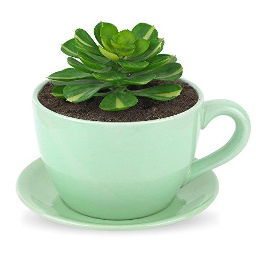 Pure.Lifestyle Porzellan Blumentopf, Grün Kräutertopf, Sukkulente Pflanze Topf, Kaffeetassen-förmig, Size S
