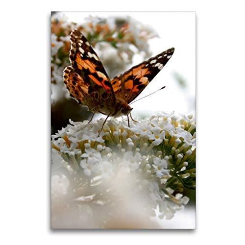 Premium Textil-Leinwand 60 x 90 cm Hoch-Format Schmetterling | Wandbild, HD-Bild auf Keilrahmen, Fertigbild auf hochwertigem Vlies, Leinwanddruck von Christine Bässler